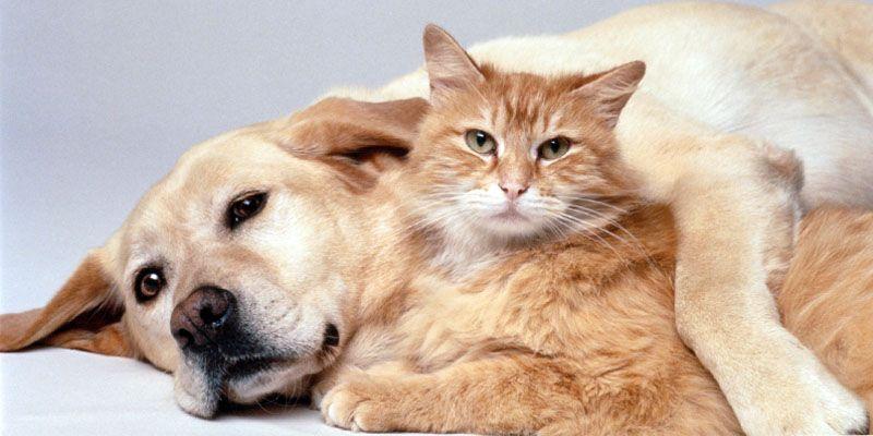 Cani e gatti, amici domesticati da secoli5-800x400