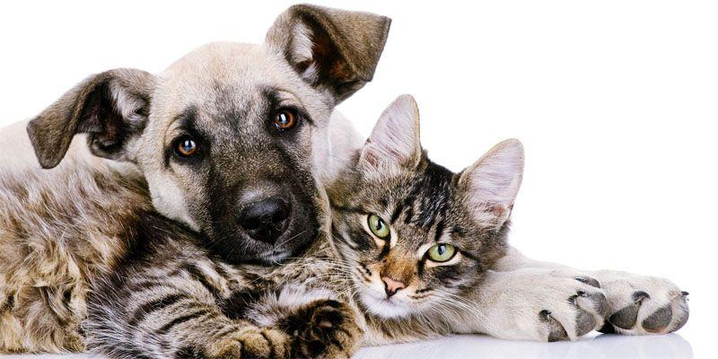 Cani e gatti, amici domesticati da secoli6-800x400