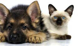 Cani e gatti, amici domesticati da secoli7-800x400