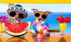 Cani e vacanza1-800x400