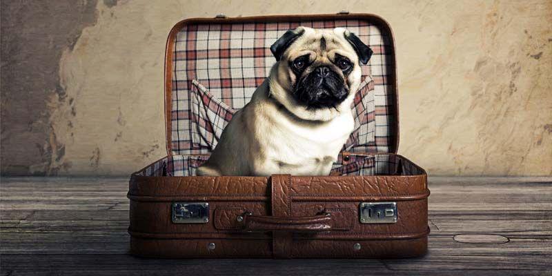 Cani e vacanza4-800x400