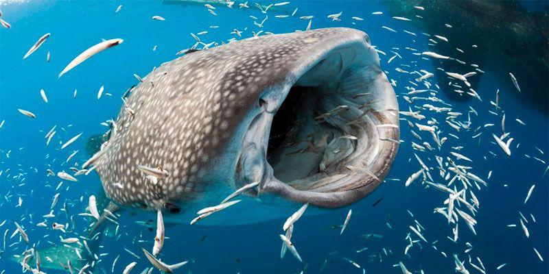 I giganti del mare1-800x400