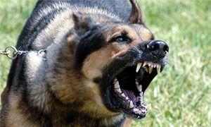 Labbaiamento del cane-300x180