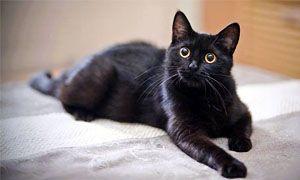 Superstizioni e passioni sui gatti-300x180