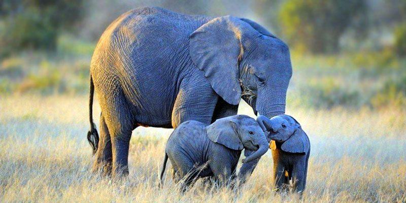 elefante africano-800x400