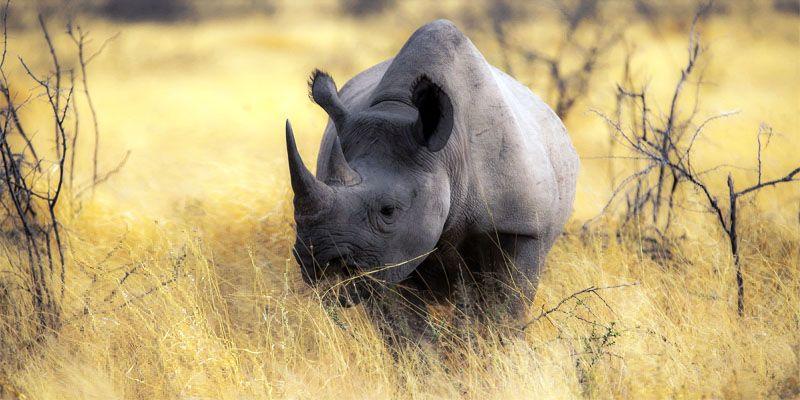 rinoceronte-800x400