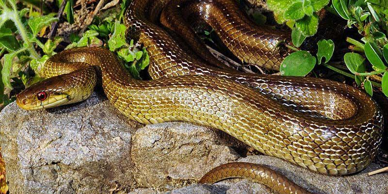 Serpenti1-800x400