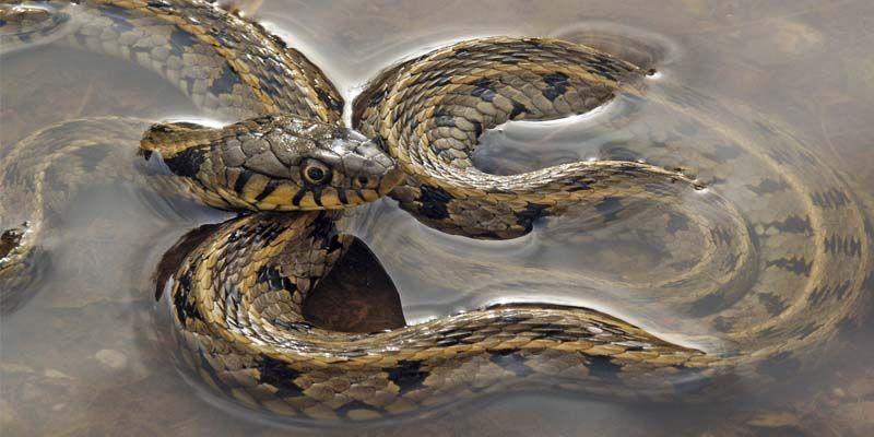 Serpenti2-800x400