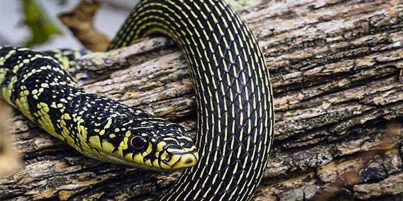 Serpenti4-800x400