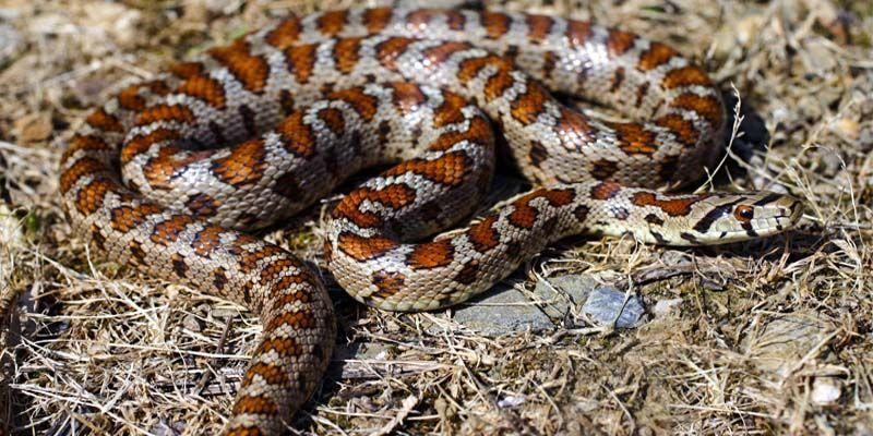 Serpenti5-800x400