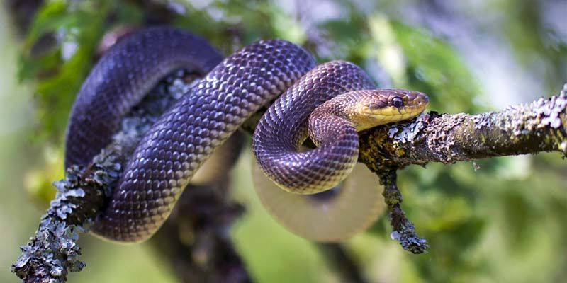Serpenti6-800x400