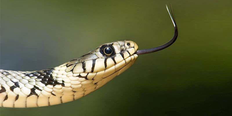 Serpenti7-800x400