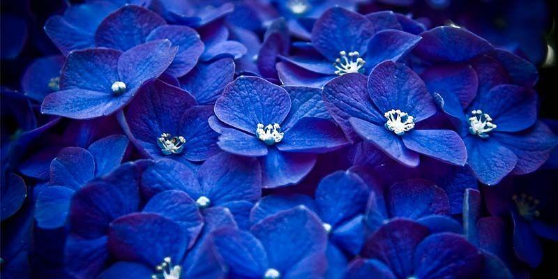 Il colore blu1-800x400