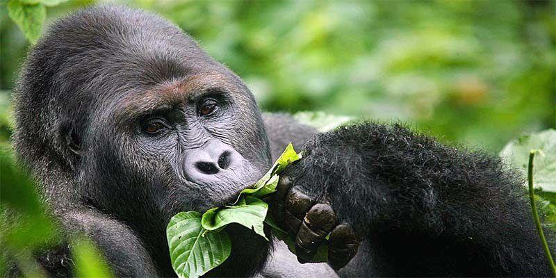 Primati in pericolo1-800x400