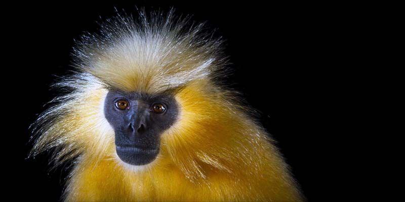 Primati in pericolo3-800x400