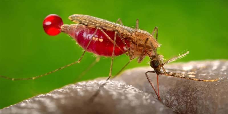 Malaria3-800x400