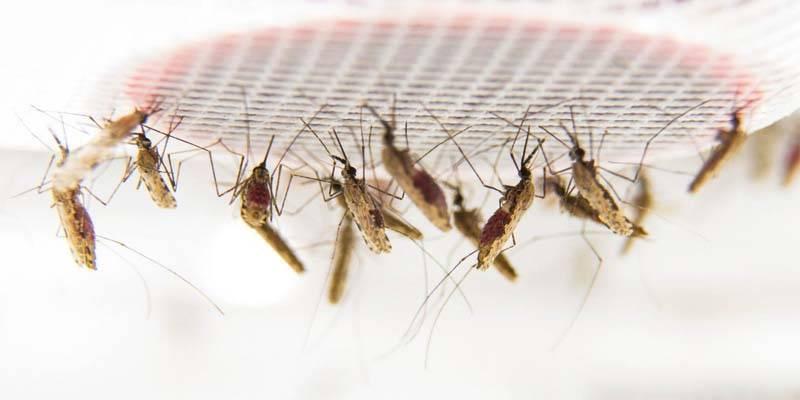 Malaria7-800x400