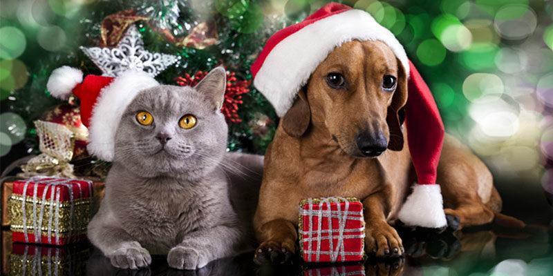 cani gatti botti delle Feste1-800x400