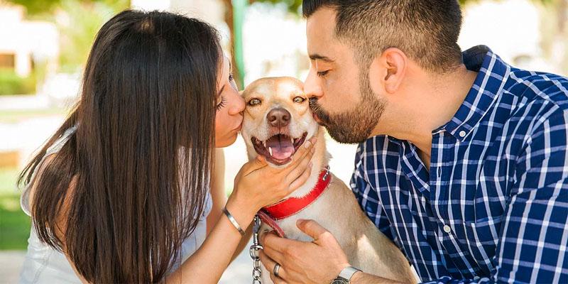 10 segreti per vivere felici cane2-800x400