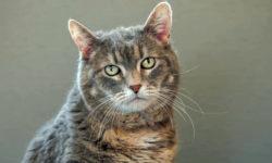 8 consigli utili gatto1-800x400