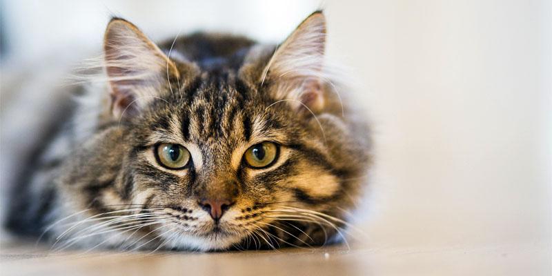 8 consigli utili gatto3-800x400