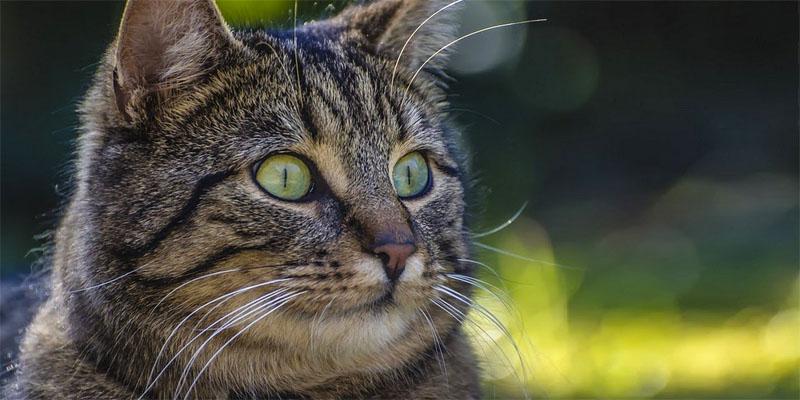 Come mantenere giovane il gatto1-800x400