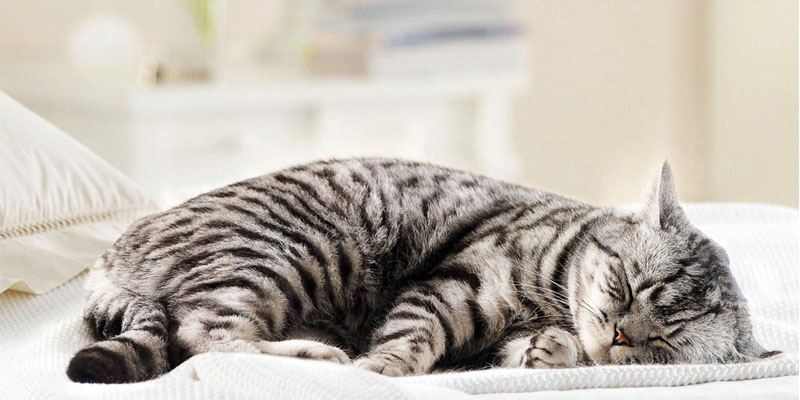 Come mantenere giovane il gatto3-800x400
