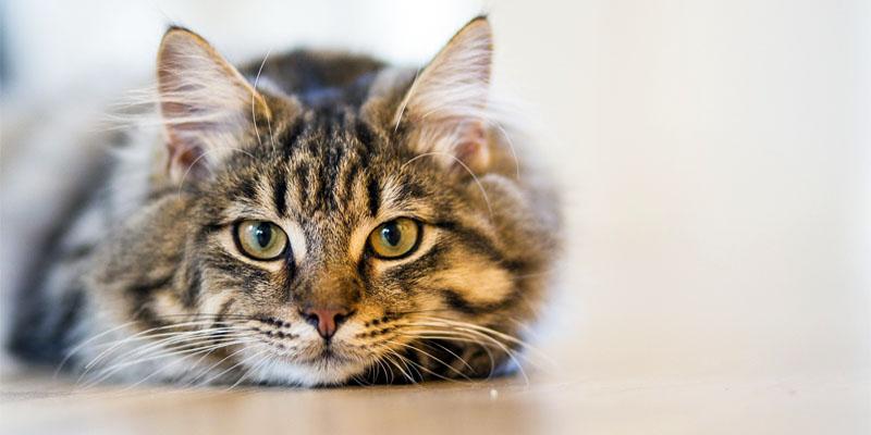 Come mantenere giovane il gatto5-800x400