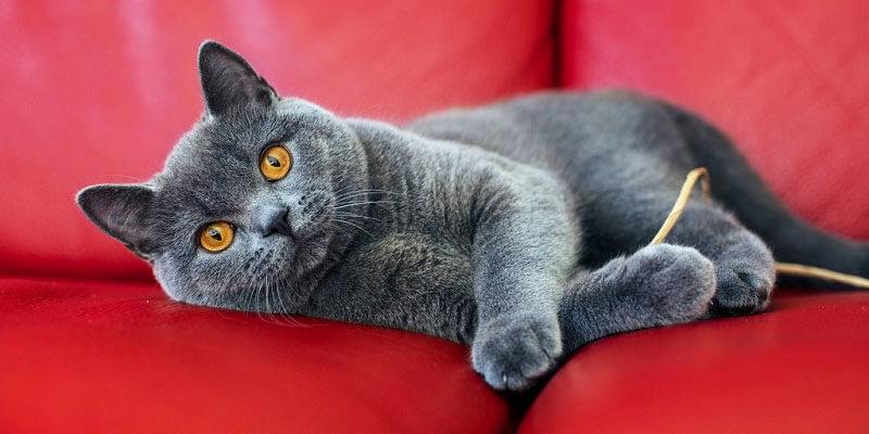 Come mantenere giovane il gatto9-800x400