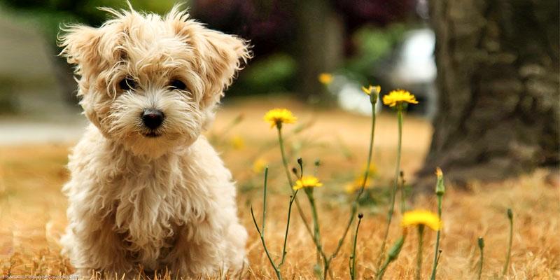Come rendere felice il nostre cane2-800x400