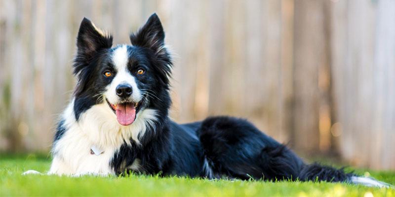 Come rendere felice il nostre cane4-800x400