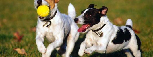 Il cane e il gioco3-800x400