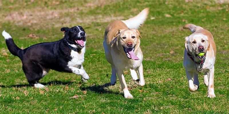 Il cane e il gioco7-800x400