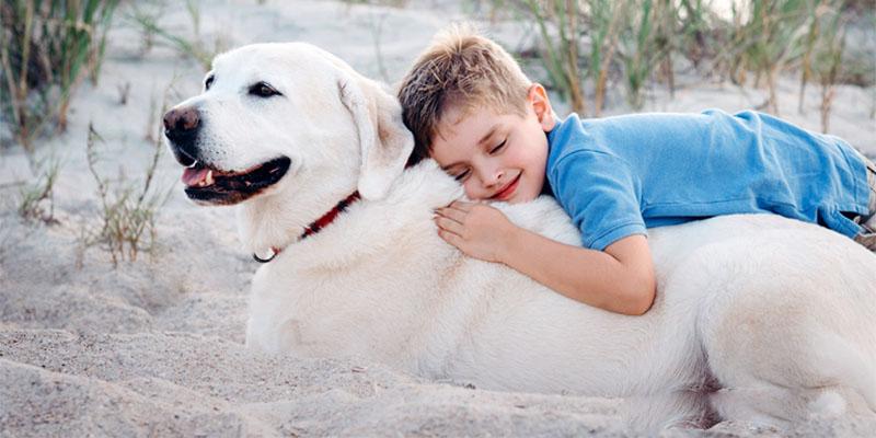 Il cane e le regole di socializzazione1-800x400