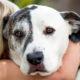 Il cane e le regole di socializzazione3-800x400