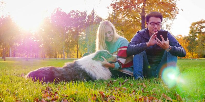 Il cane e le regole di socializzazione4-800x400