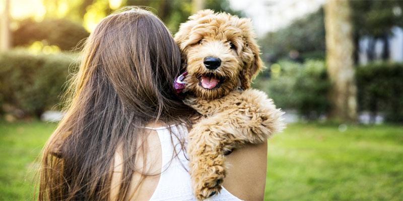Il cane e le regole di socializzazione5-800x400