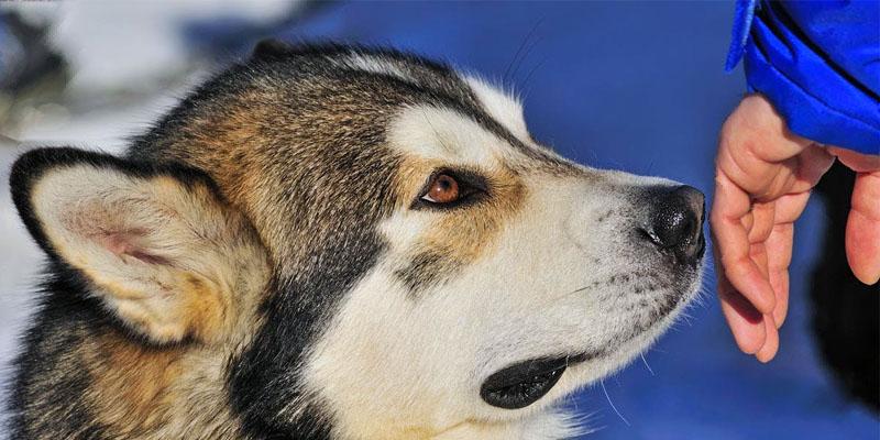 Il cane e le regole di socializzazione6-800x400