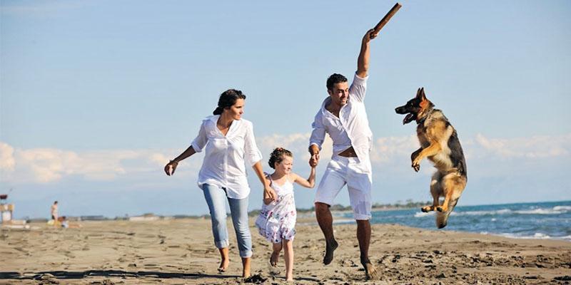 Il cane e le regole di socializzazione7-800x400