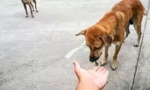 Il galateo canino-300x180