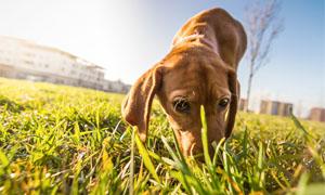 cane che annusa-1-300x180