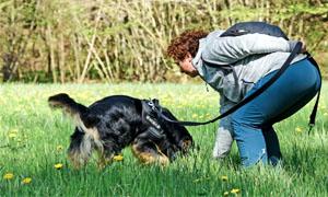 cane che annusa-3-300x180