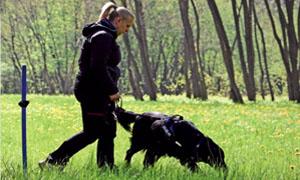 cane che annusa-4-300x180