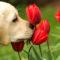 cane che annusa-5-800x400