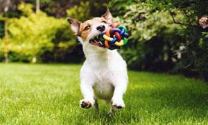 cane-che-gioca-5-300x180