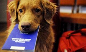 cane-con-passaporto-in-bocca-300x180