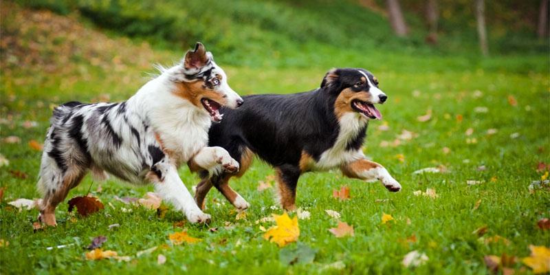 cani-giocano-tra-loro-3-800x400