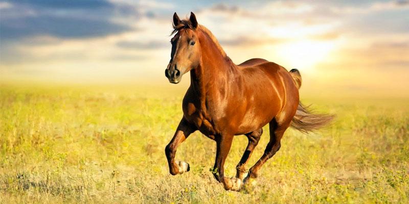 cavallo-3-800x400