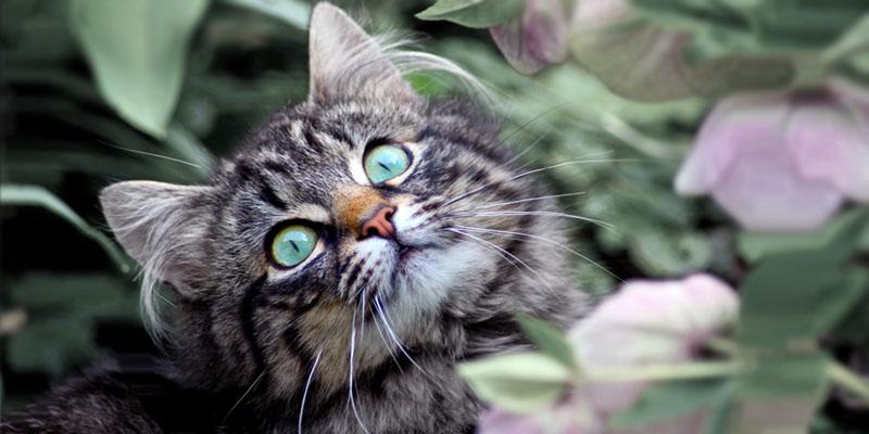 gattino-5-800x400