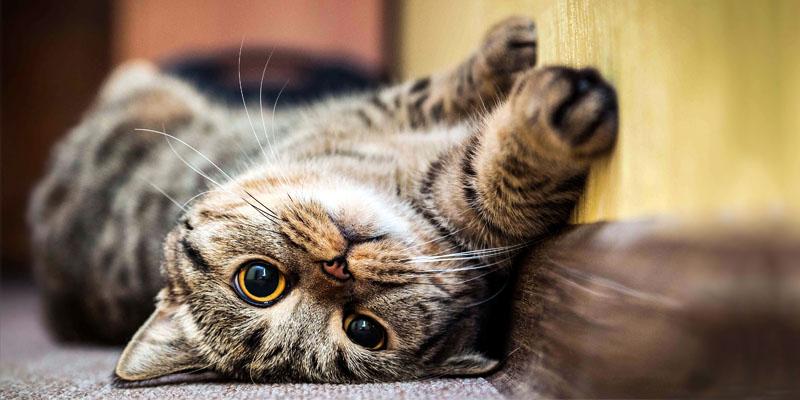 gattino-che-gioca-1-800x400